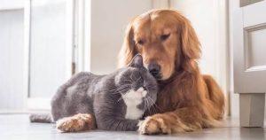 חיות מחמד בדיור מוגן
